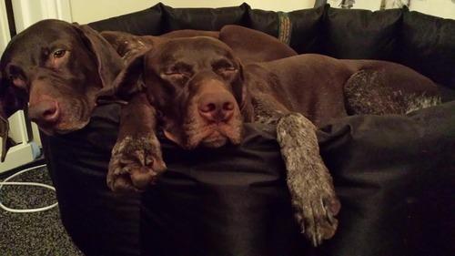 Final Cani-Fit Winter Motivator Blogs