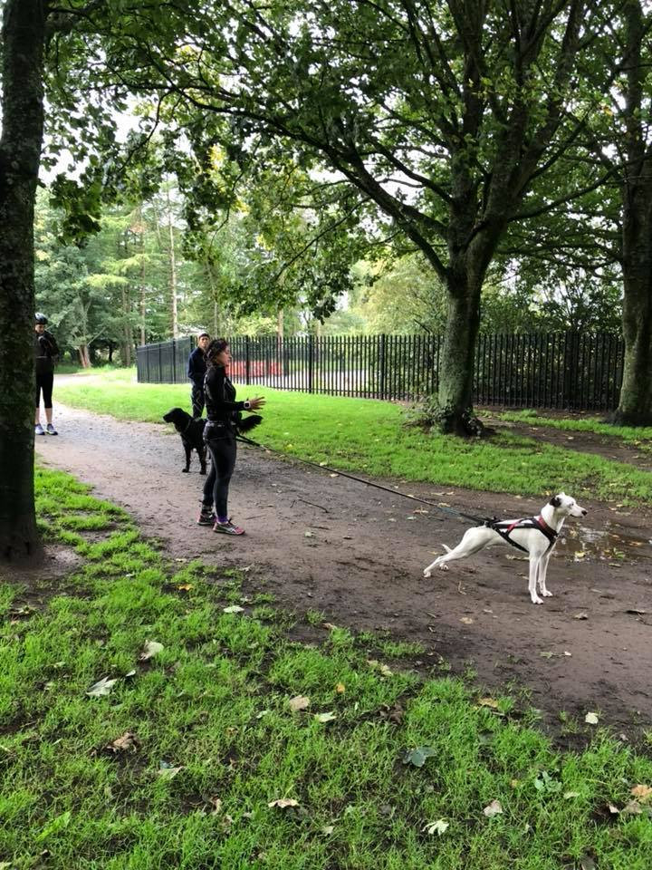 Cani-Fit - Canicross Leader Training Course