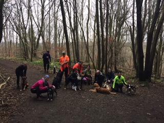 Cani-Hiking Adventure New Lanark